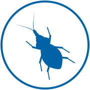 'kissing bug' icon